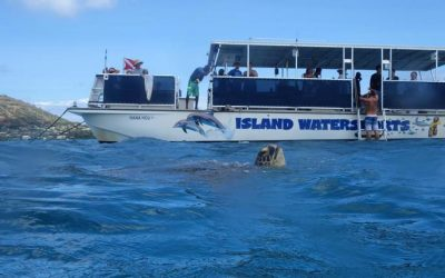 What Makes a Great Snorkeling Tour?