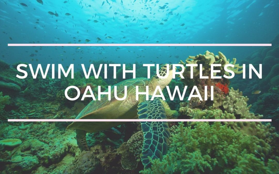 Swim With Turtles Oahu Hawaii